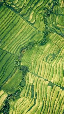 绿色田园风景航拍图图片