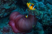 深海珊瑚图片
