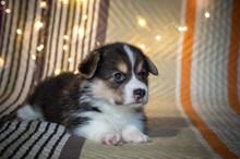 可爱幼年小狗图片下载