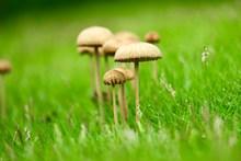 青草地蘑菇摄影图片下载
