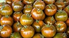 丰收番茄精美图片