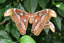绿叶上漂亮蝴蝶精美图片