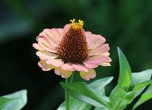 彩色松果菊花朵高清图
