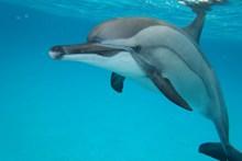 海洋海豚观赏高清图