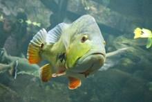 水族馆绿色鱼图片下载