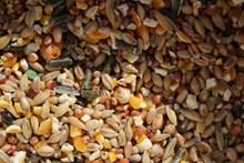 谷物粮食图片大全