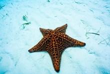 好看的海星精美图片