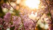 逆光摄影花朵 逆光摄影花朵大全图片大全