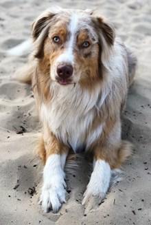 可爱大狗狗图片素材