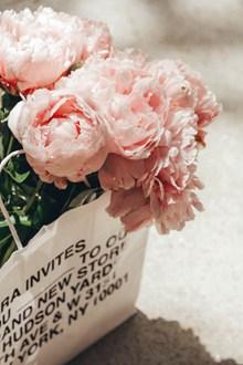 粉色唯美牡丹花束 粉色唯美牡丹花束大全图片大全