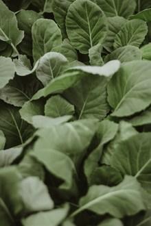 绿叶蔬菜高清 绿叶蔬菜高清大全精美图片
