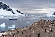 可爱南极小企鹅 可爱南极小企鹅大全图片大全