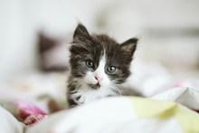 可爱卖萌小奶猫图片素材