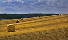 黄色稻田稻草包高清图