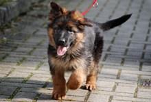 宠物狗遛狗图片