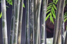 绿色竹子枝干图片素材