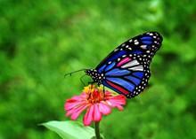 花朵上彩色蝴蝶图片大全