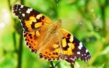高清彩蝶摄影精美图片