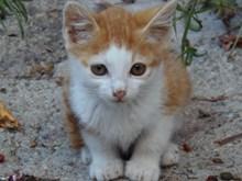 呆萌宠物小猫精美图片