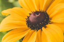好看的向日葵微距图片大全
