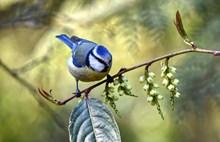 灰背燕尾鸟高清图