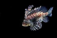 热带彩色观赏鱼 热带彩色观赏鱼大全高清图