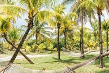 椰子树林风景图片大全