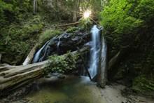 森林小溪山间流水高清图