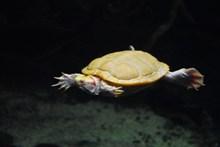 水族馆爬行乌龟图片