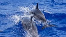 海洋两只大海豚图片素材