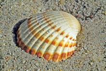 漂亮沙滩贝壳图片下载