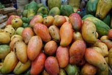 芒果丰收图片