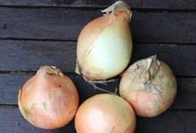 红皮蔬菜洋葱图片下载