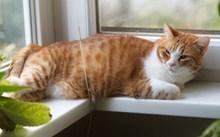 虎斑猫慵懒高清图片
