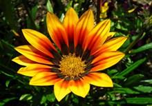 彩色菊花花朵高清图