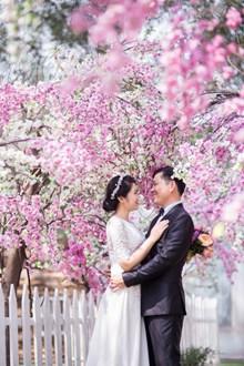 樱花树下婚纱摄影图片