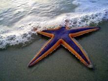 沙滩上的海星图片下载
