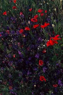 庭院花圃特寫圖片素材