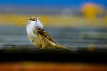 小型雀鸟图片大全