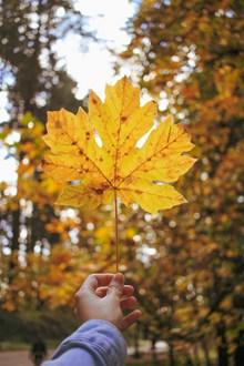 手拿秋天落叶图片下载