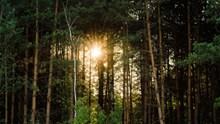 树林阳光照射图片大全
