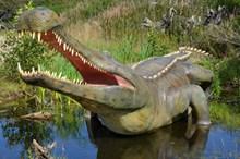 河边大鳄鱼高清图片