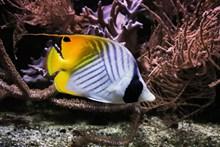 彩色观赏小鱼图片大全