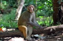 森林野生小猴子图片