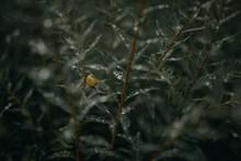 带水珠的绿叶精美图片