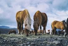 高原马匹照片图片