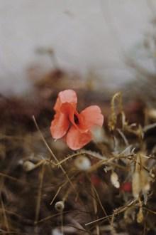 非主流花朵唯美高清图
