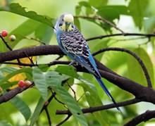 一只愛情鳥高清圖片
