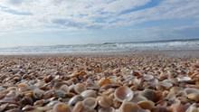 海边海滩贝壳图片下载
