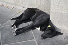 黑色流浪小狗高清图片